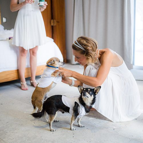 Bride with dogs as ring-bearers