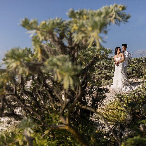Bride and groom in trees near beach